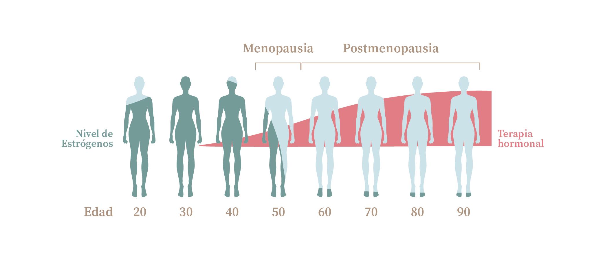 Nivel hormonal estrógenos
